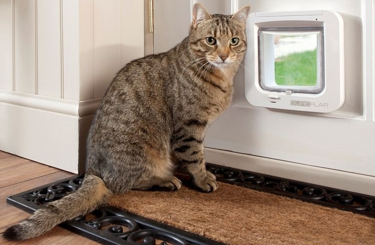 Installing a pet door what you should know